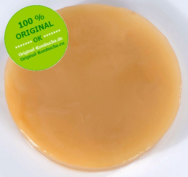 Kombucha START SET Classic-FRESH, Bio, for 3 L Ø 11 cm