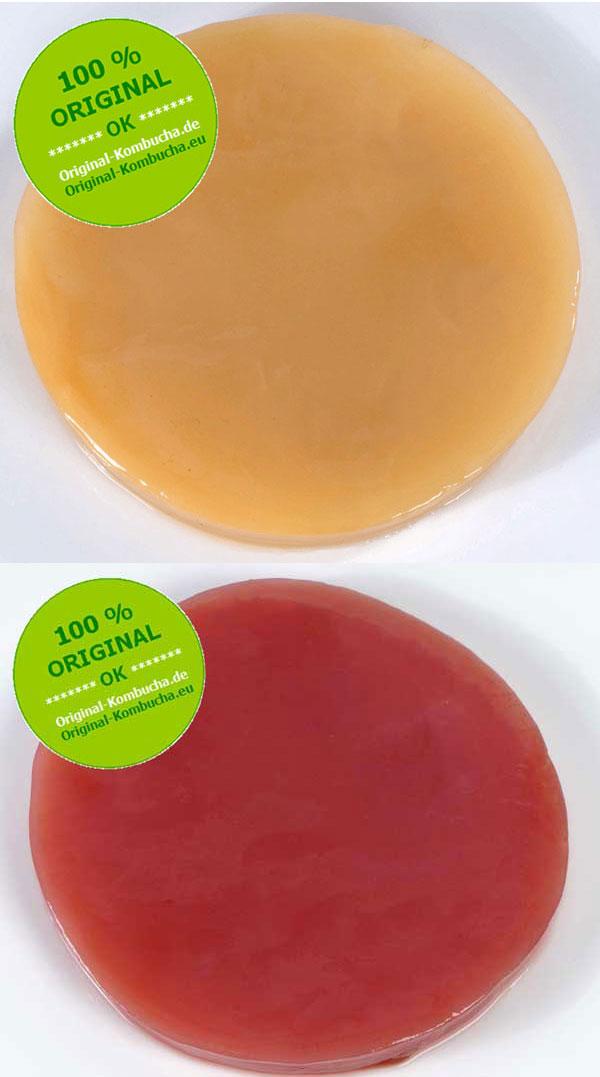 Original-Kombucha-Teepilz Fresh und Fruit, rund